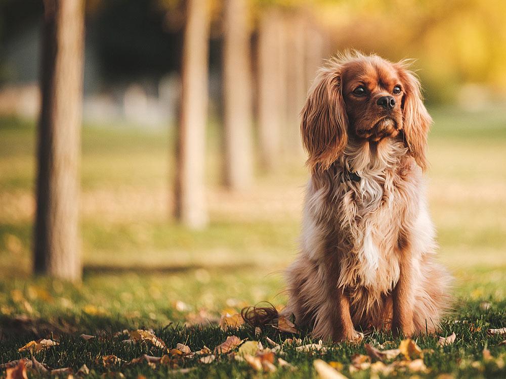 Рацион для собаки
