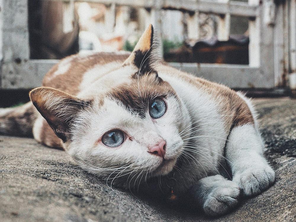 Как сохранить Вашу кошку здоровой