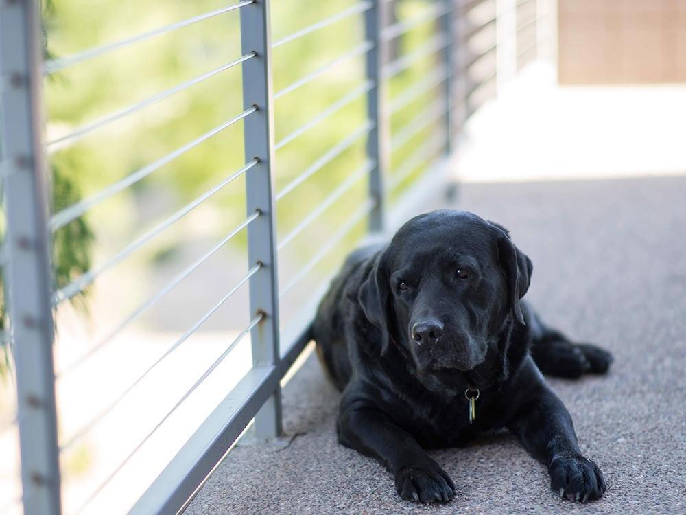 Советы для здоровой жизни собаки
