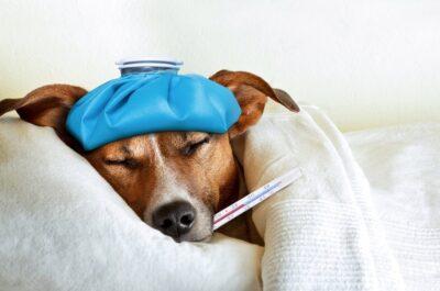температура животных