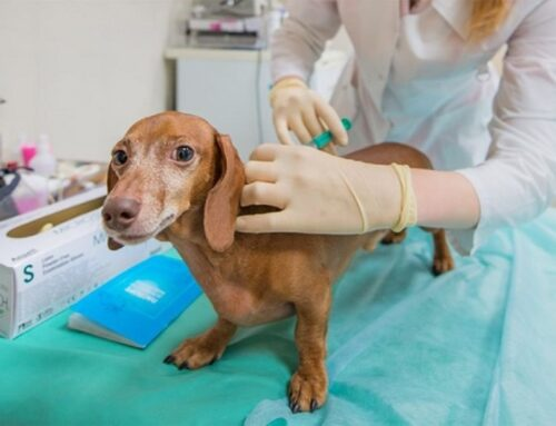 Вакцины от бешенства для кошек и собак